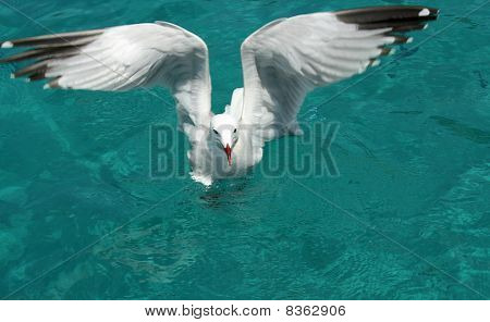 Seagull Started To Fly