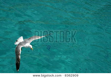 Flying Seagull Over The Water