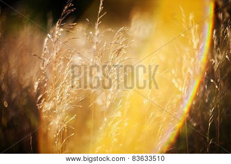 Dry Grass And Bent Background