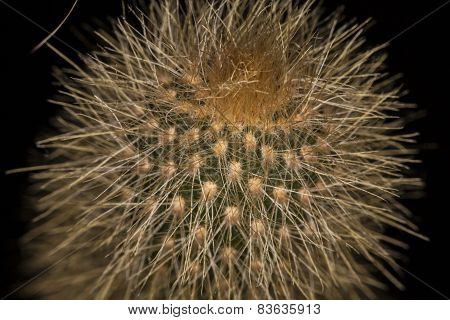 Lot Of Cactus Needles Background