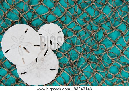 Sand dollar collage with fish net and teal blue board background
