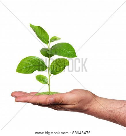 Plant In A Hand, Isolated