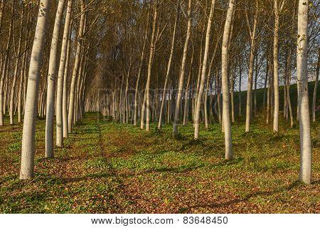 Poplars Alley