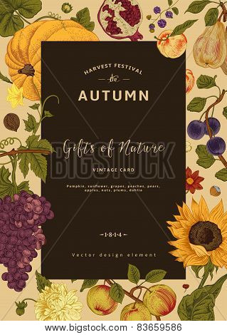 Autumn harvest. Vector vintage card.