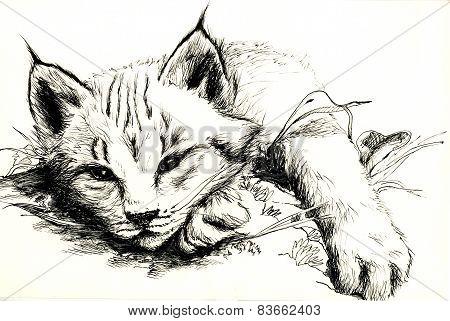 Black and white bobcat