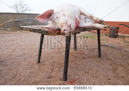 Pig Just After Slaughtering