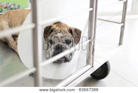 Dog Is Sick In Hospital