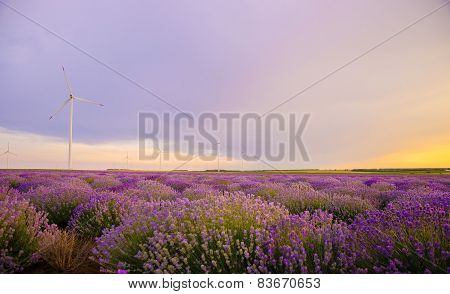 Lavender Field With Wind Turbine At Sunset