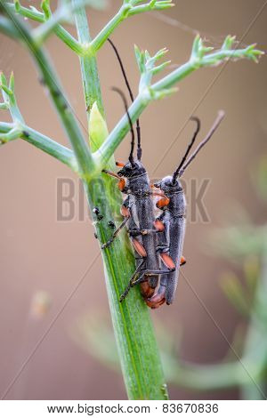 two insects having sex on a green branch