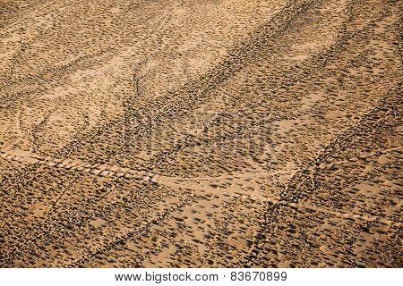 Desert Nevada