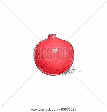 garnet fruit pomegranate sketch draw isolated over white background