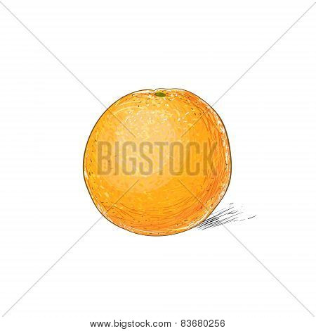 orange citrus fruit color sketch draw isolated over white background