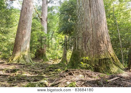 Raised roots forest