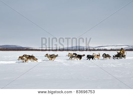 Traditional Kamchatka Sled Dog Racing