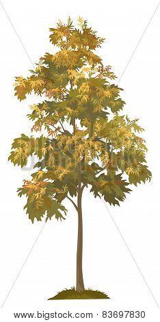 Acacia autumnal tree and grass