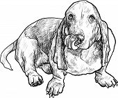 foto of hound dog  - Adorable basset hound dog sitting and stick out it - JPG