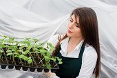 picture of greenhouse  - Young woman working in a greenhouse holding a crate with seedlings in a greenhouse - JPG