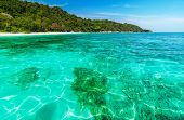 stock photo of crystal clear  - Coral reef under crystal clear sea at tropical island Andaman sea Thailand - JPG