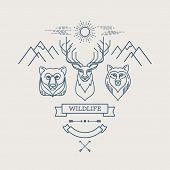 image of zoo animals  - Wild animals - JPG