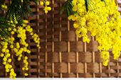 picture of mimosa  - Branch of mimosa on wicker background - JPG
