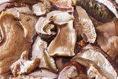 image of porcini  - Particular of porcini mushrooms in water - JPG