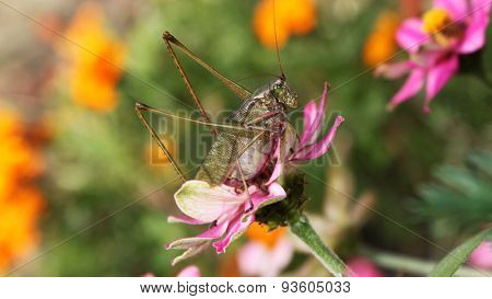 A large grasshopper on a flower