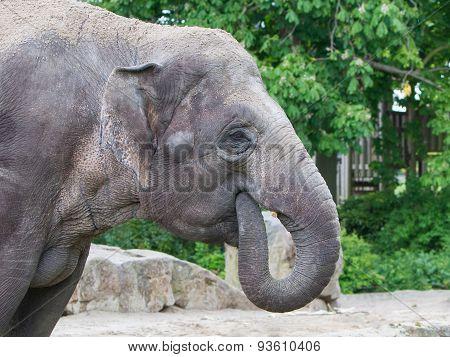 Closeup Of Anin A Zoo