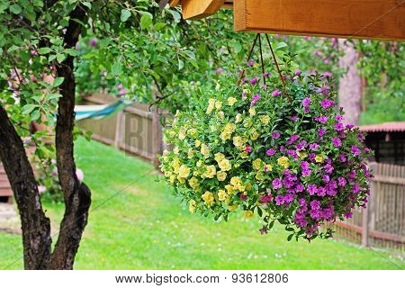 Flower Pot With Colorful Petunia Hanging In Backyard
