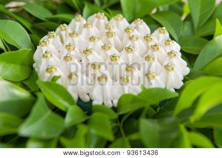 Thai Wedding Object