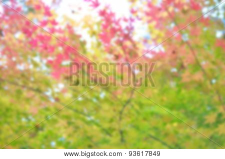 Blur Colorful Japanese Maple Leaf In Autumn