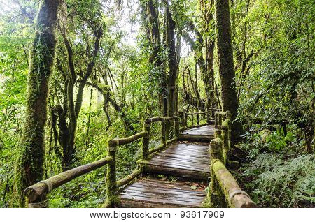 Pathway In Forest At Doi Inthanon Chiangmai Thailand