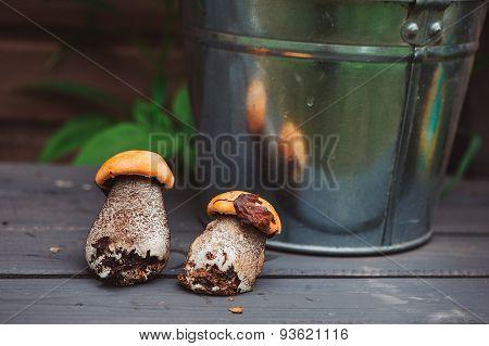 wild edible orange cap boletus mushrooms on wooden bench