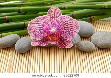 Beautiful orchid and bamboo grove with stones on mat
