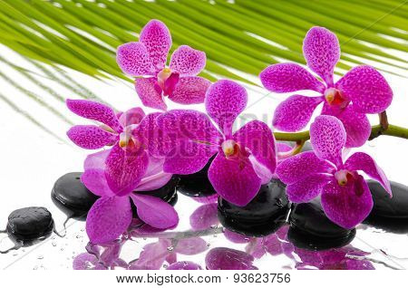 Branch pink orchid on palm leaf