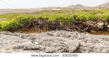 Manchineel Trees Beyond Coral