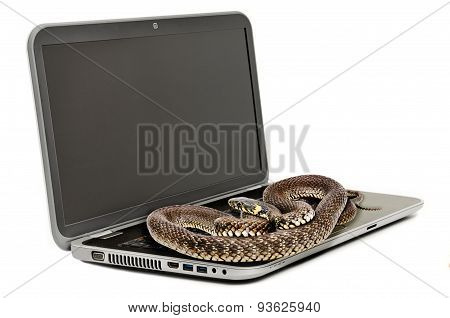 The snake lying on the laptop looking at the screen