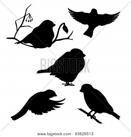 Bullfinch set vector