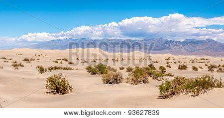 Panorama Of Mesquite Flat - Sand Dunes