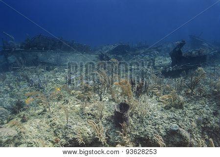 Reef Wreck