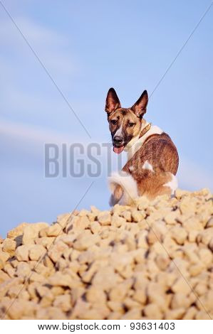 Dog Sits On Filling Brick Against The Blue Sky.
