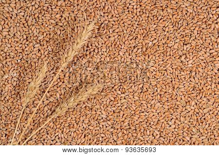 Ears Of Wheat On A Wheat Grains