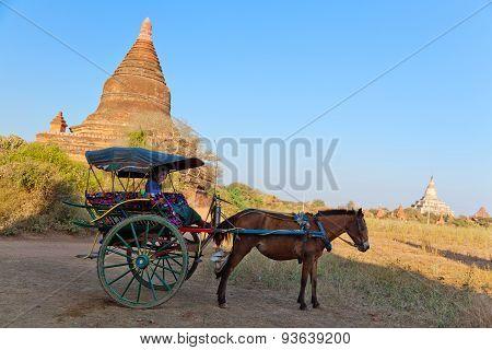 Horse Cart In Bagan, Myanmar