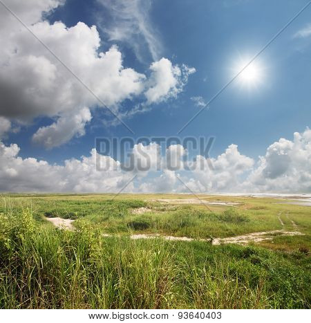 Grass Tree Of Daytime Sky For Nature Background.
