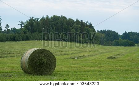 fresh cut hay and baled