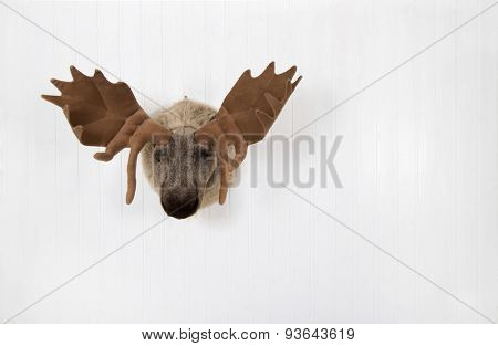Elk of plush hanging on a white wooden wall for decoration.