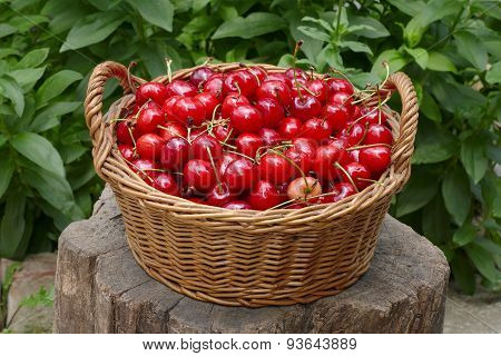 Agriculture, Sweet Cherry Fruit In Basket