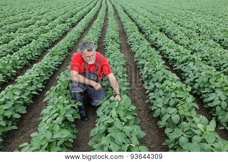 Farmer Or Agronomist In Soy Field