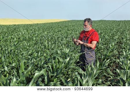 Agricultural Scene, Farmer In Corn Field