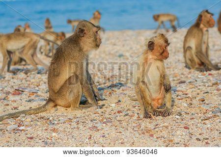 Monkey On The Shore.