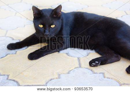 Black Cat. Black Cat With Yellow Eyes